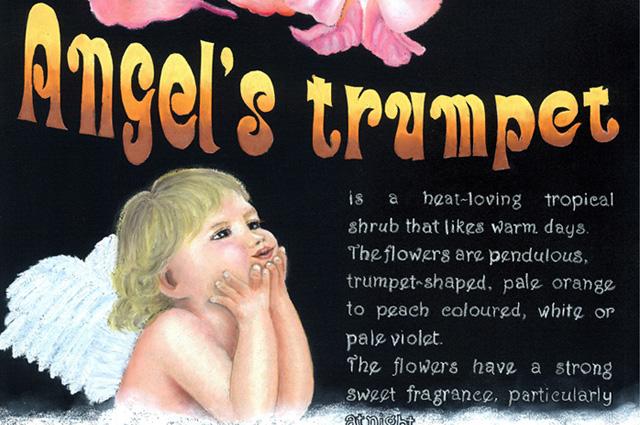 Angel hp